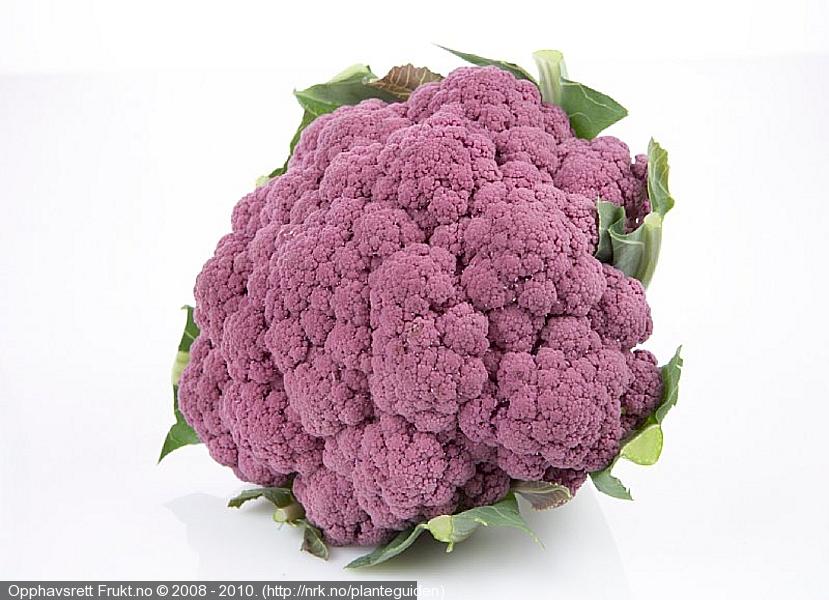 cauliflowerpurple