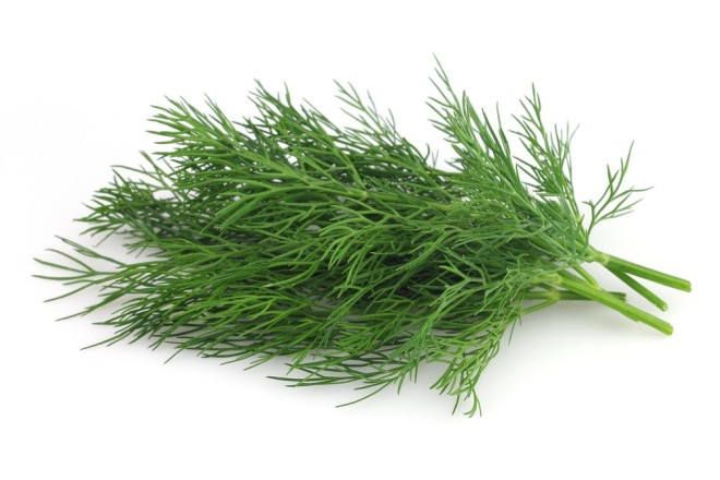 dill2